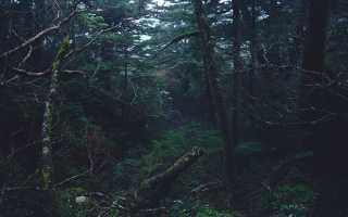 Ночлег в лесу: устройство ночлега зимой, летом, с палаткой и без палатки