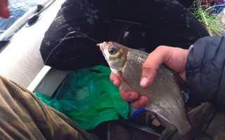 Ловля на рыболовную снасть кольцо: как устроена, как изготовить своими руками