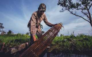 Как сделать ловушку для рыбы, или как поймать рыбу без удочки