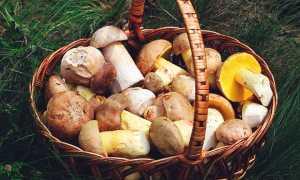 Какие грибы можно есть сырыми