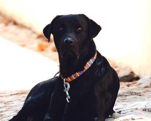 Что делать, если укусила собака:  первая помощь, лечение в домашних условиях и куда нужно обратиться