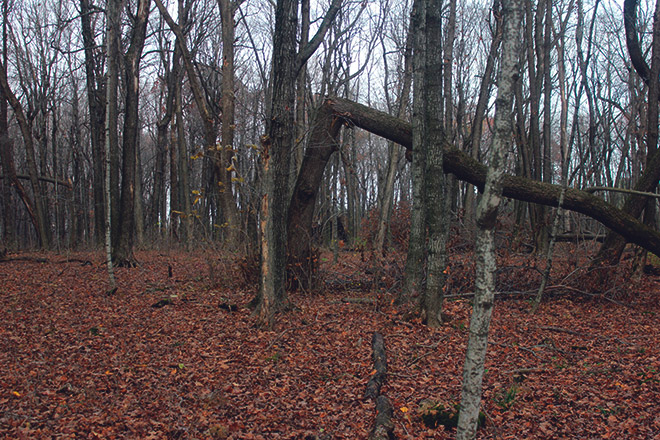 Поваленое дерево в лесу