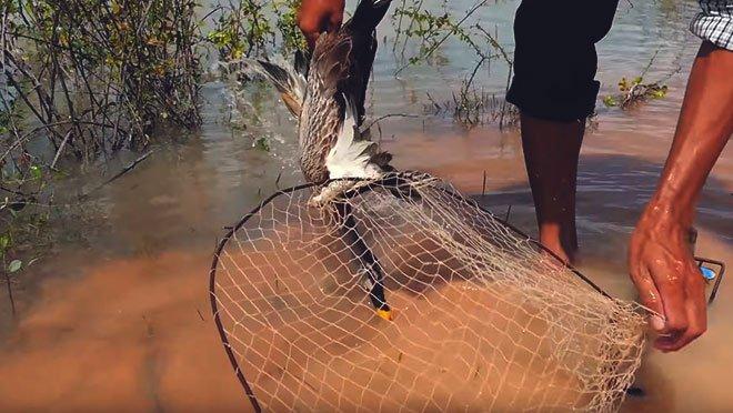 Ловушка на утку