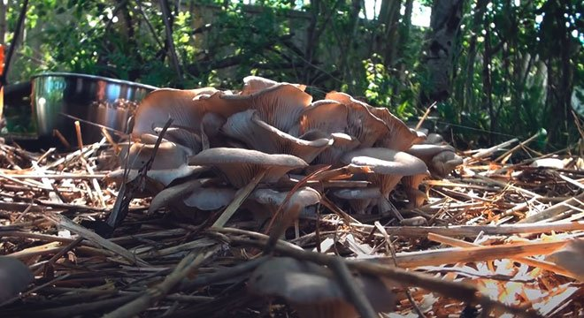 Выращенные грибы в искусственных условиях.